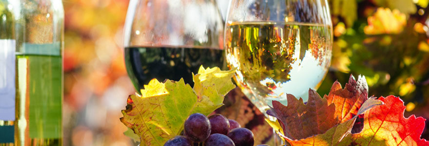 Investir dans la vigne