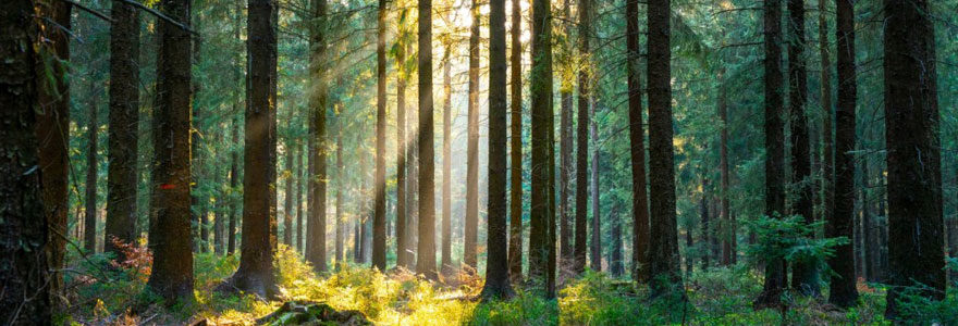 Investissement forestier privé